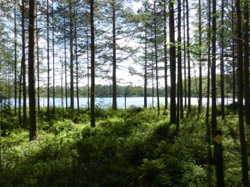 Approaching Storabborsjön