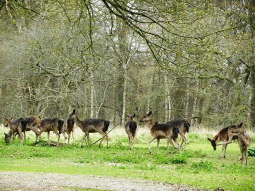Wildlife in Rail Copse, east of Tring