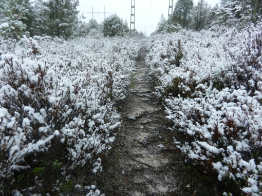 Snow on the heather by the side of the trail