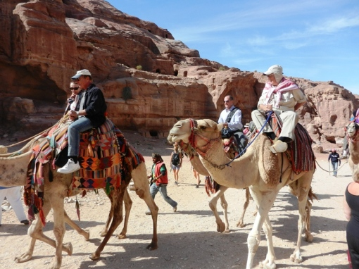 Camel rides for the tourists