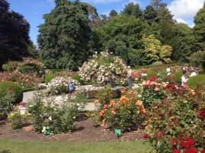 Hagley Park rode garden