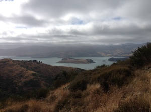 View of Quail Island in the bay outside Lyttelton