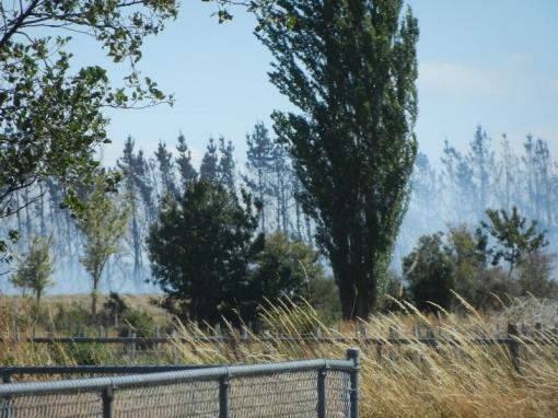 Smoke from grass fire