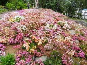 Akureyri botanical gardens