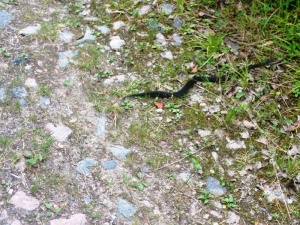 An adder on the track