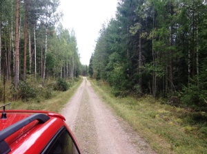 A typical road in the forest