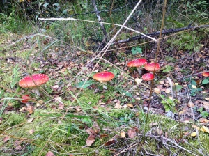 Plenty of colour in the forest
